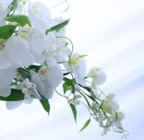 「六つ葉のクローバー」の意味と「こちょうらん」の花言葉の画像