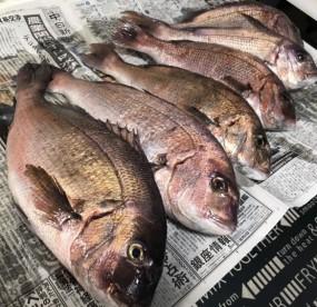 令和元年初日はおめでタイ!幸学館の丸山先生と塾釣会開催。の画像