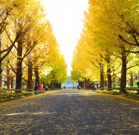 愛知県私立高校授業料一覧の画像